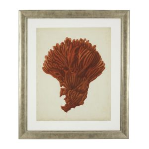 ANTIQUE RED CORALS SET OF 6 PRINTS Eichholtz 111741_2